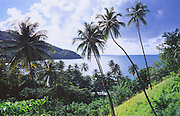 6212-1013NF ~ Copyright: George H. H. Huey ~ Coconut palm trees above remote King's Bay. Northeast coast of the island of Tobago. Trinidad and Tobago. Caribbean.