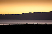 Horses graze after sunset by the east shore of lake Song Köl, Kyrgyzstan