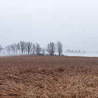 http://Duncan.co/trees-and-reeds-in-the-fog-01