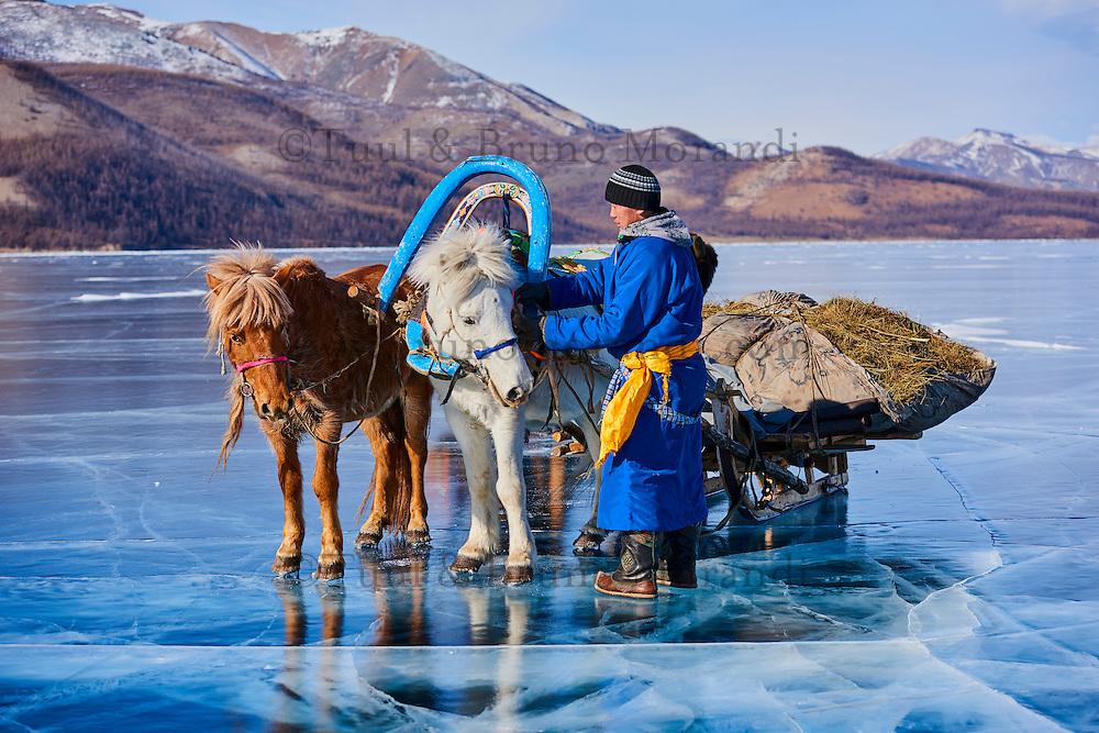 Mongolie, province de Khovsgol, traineau à cheval sur lac gelée de Khovsgol en hiver // Mongolia, Khovsgol province, horse sled on the frozen lake of Khovsgol in winter