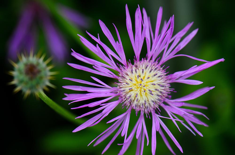 Closeup of a purple flower.