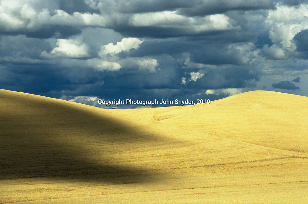 Golden wheat fields await harvest near Moscow, Idaho. The Palouse region; comprising 4000 square miles of wind-deposited hills in Eastern Washington and Northern Idaho; is one of the most productive dry-farming regions of the world; boasting bountiful harvests of wheat; peas; and lentils.