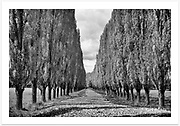 Autumn at Stonehenge near Glen Innes in the New England high country of New South Wales [Stonehenge, NSW]<br />