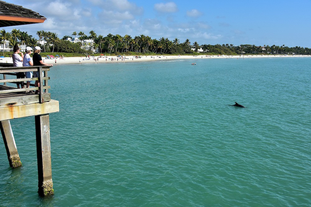 Dolphin swimming near pier in naples florida encircle for Dolphin fishing florida