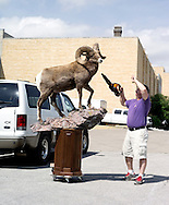 "Carl Tregre from Houma, Louisiana unload and prepare his big horn sheep ""The Ghost Dancer"""