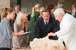 © Licensed to London News Pictures. 21/07/2014. Llanelwedd, UK. British PM David Cameron and new Secretary of State for Environment, Food and Rural Affairs, Liz Truss visits the sheep-shearing shed at the show. A record numbers of visitors in excess of 240,000 are expected this week over the four day period of Europe's largest agricultural show. Livestock classes and special awards have attracted 8,000 plus entries, 670 more than last year. The first ever Royal Welsh Show was at Aberystwyth in 1904 and attracted 442 livestock entries. Photo credit: Graham M. Lawrence/LNP