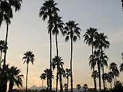 palm trees at sunset with mountains in the distance Palm springs USA