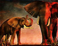 "The title of this piece is French. It translates to ""We've Seen You."" As you regard the message of the title in relation to the actual art of this piece, you will certainly also appreciate the remarkable detail and personality that is captured in this scene depicting two elephants. They have most certainly seen you, and there is no telling what might happen next. With a scene this gorgeous, the temptation is to get closer. However, sometimes, a respectful distance is a must. This piece is available for canvas prints, metal prints, acryl prints, framed prints, or on interior products like beach towels or duvet covers."