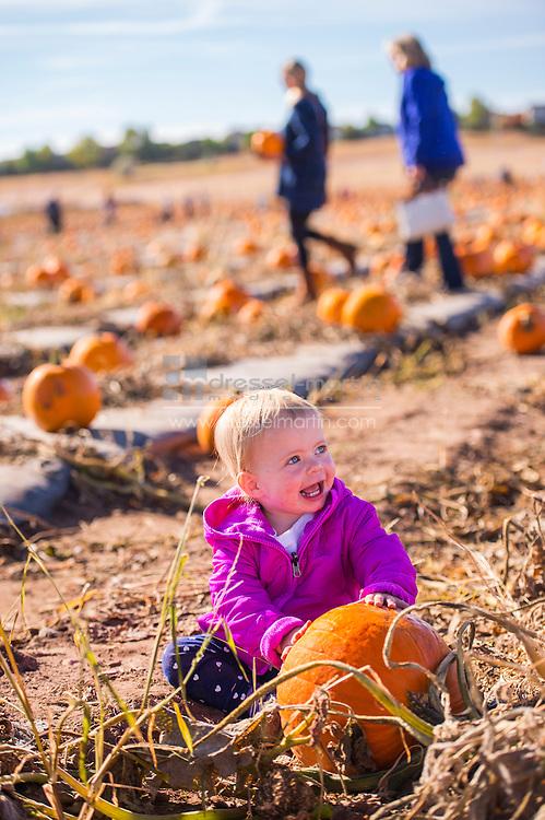 pumpkinfest and cornmaze