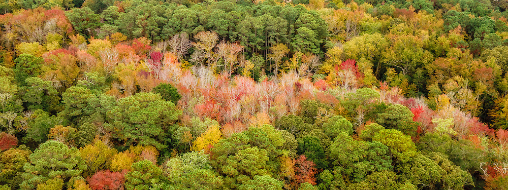 The trees in the low-lying wet area lose their leaves first in this fall aerial photograph on the Outer Banks of North Carolina.