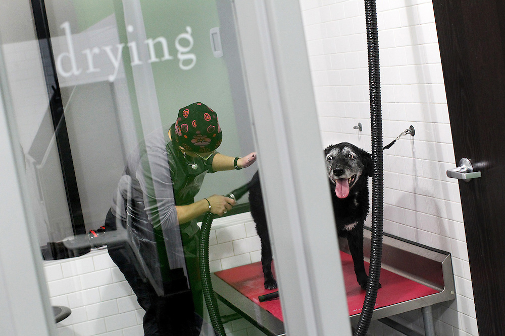 Pet owners have the option to dry their dogs with heated air or simply towels in the self-serve dog wash area at Ollu Dog Salon in Minneapolis November 14, 2012.