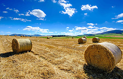 Straw bales in a field by the River Clyde in South Lanarkshire Scotland in late summer<br /> <br /> (c) Andrew Wilson | Edinburgh Elite media