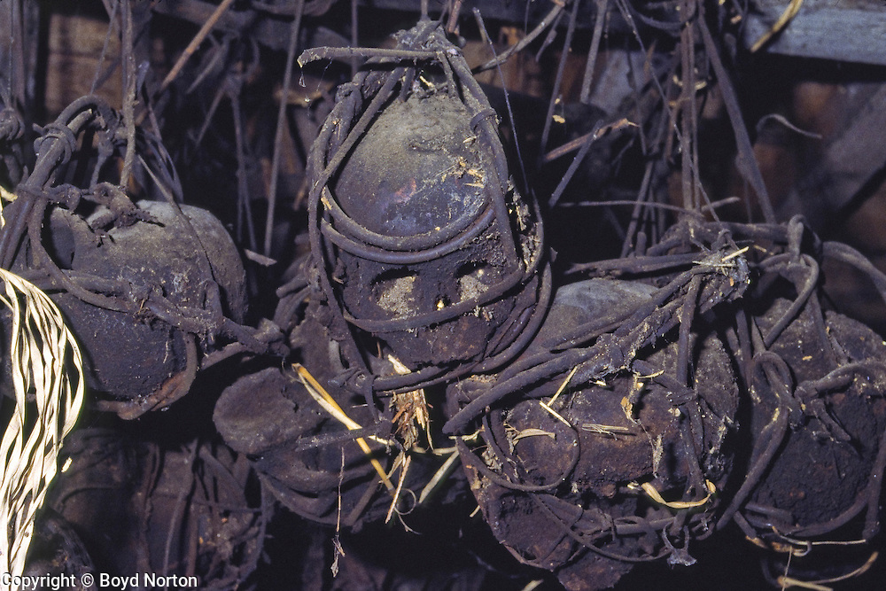 Skulls in longhouse, Iban tribe, former headhunters, rainforest Skrang River, Sarawak, Borneo, Malaysia.