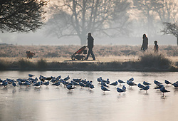 © Licensed to London News Pictures. 28/12/2016. London, UK. A family walk past a frozen pond in Bushy Park. A very cold start to the day in some parts of the UK with temperatures well below freezing at dawn. Photo credit: Peter Macdiarmid/LNP