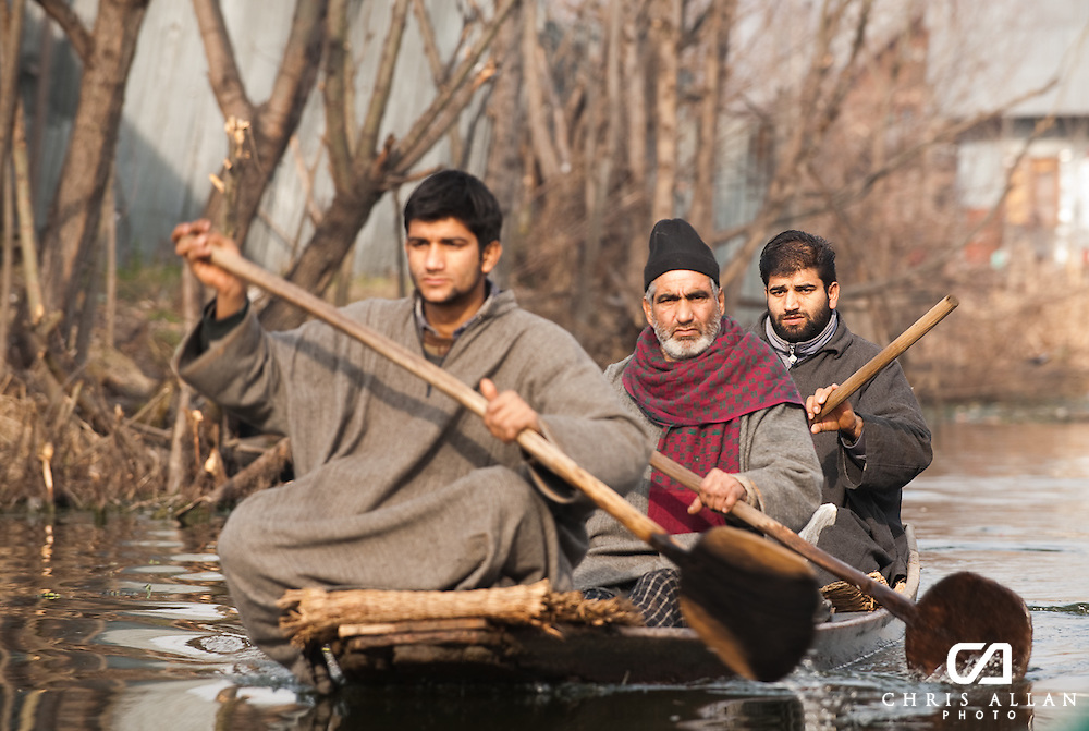 Three men paddle along the backwaters of Dal Lake, Srinagar, Kashmir, India
