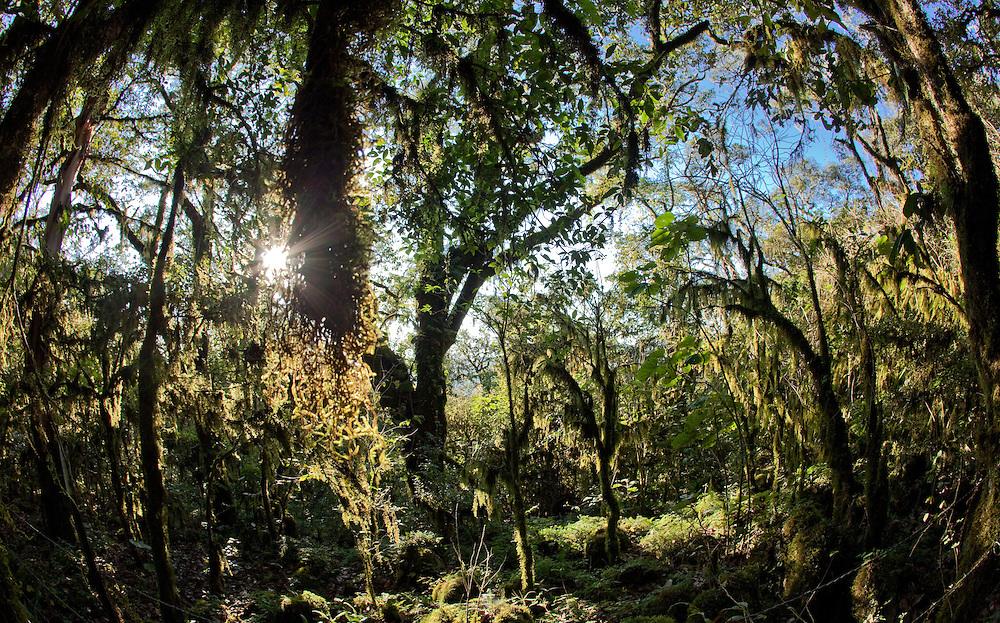 Sierra Gorda forest in Queretaro Province, Mexico