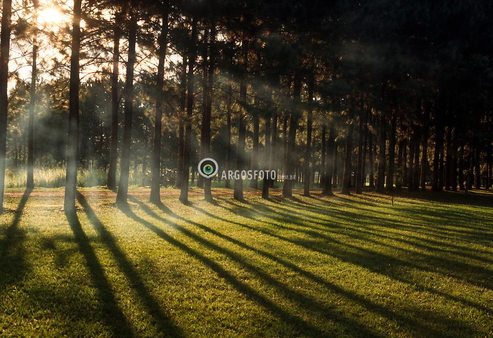 Bosque iluminado/ Lighted woods