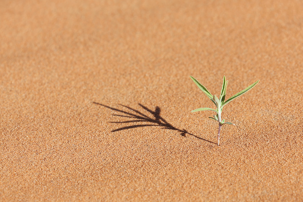Tiny green desert plant in sand.