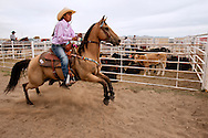 Barrel Racing, begins run, Rocky Boy Rodeo, Rocky Boy Indian Reservation, Montana
