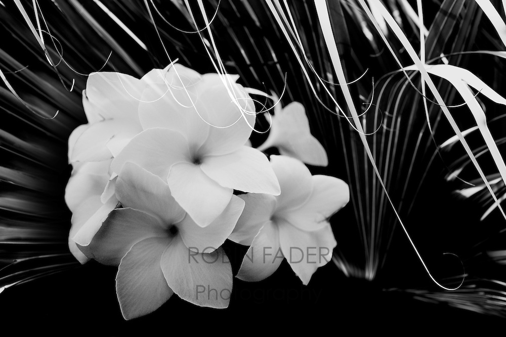 A cluster of flowers from St. Martin settled in a nest of wild palms.