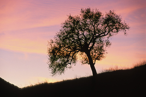Simple Landscape Tree Beauty And Nature Landscapes Can Be Found As An Oak
