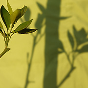 Egypt, Luxor. October/23/2008...Morning light studies - green on green.