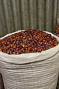 Dried red hot cascabel chili pepper at Benito Juarez market in Oaxaca, Mexico.
