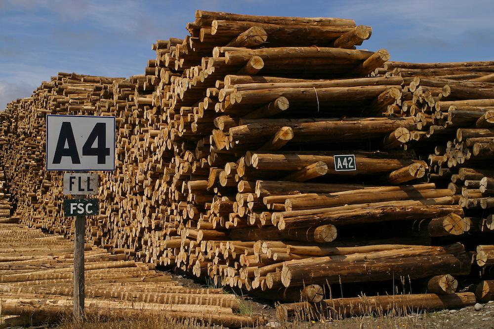A Forestal FSC log sorting yard at Los Lagos, Puerto Montt, Chile, Feb. 13, 2004. Daniel Beltra/Greenpeace.