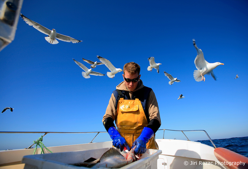 UK ENGLAND CORNWALL SENNEN COVE 11JUN08 - Handline fisherman Will Treneer (19) of Newlyn guts and cleans Pollack he caught off the coast of southwest Cornwall on his boat, the Cornish Rose...jre/Photo by Jiri Rezac / WWF UK..© Jiri Rezac 2008..Contact: +44 (0) 7050 110 417.Mobile:  +44 (0) 7801 337 683.Office:  +44 (0) 20 8968 9635..Email:   jiri@jirirezac.com.Web:    www.jirirezac.com..© All images Jiri Rezac 2008 - All rights reserved.