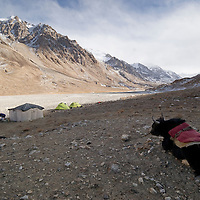 Yaks and camp. Big Pamir, Afghanistan.