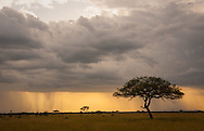 Late day storm in the Serengeti, Tanzania. http://www.gettyimages.com/detail/photo/skys-the-limit-royalty-free-image/475623925
