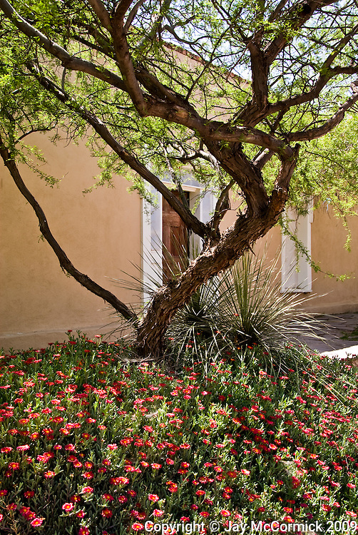 "Garden in front of traditional stucco home in downtown ""Old Mesilla, NM"""