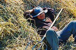 China, Datong, 2007. Autumn in the fertile fields south of Datong sees many seasonal activities. This farmer was threshing grain using a traditional ox-team to crush the stalks..