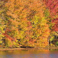 Early morning sun lights up the shoreline of the Clear Fork reservoir during peak autumn color.