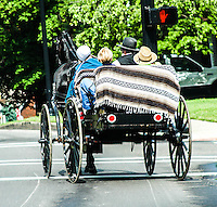 Amish Family in Buggy image for sale