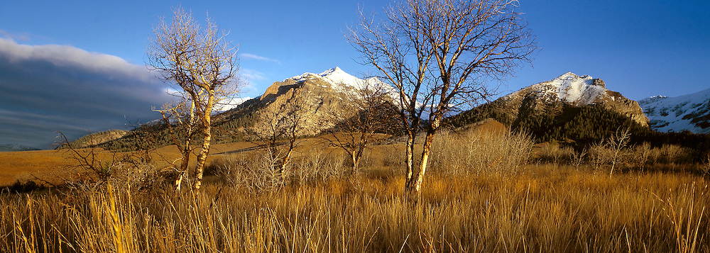 Long golden gras blankets the foothills of the Boulder Mountains in the Sawtooth National Recreation Area.