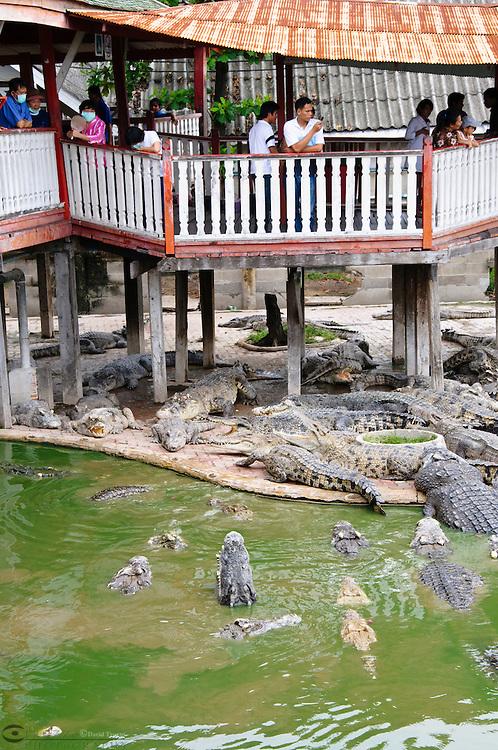 Crocodiles Samphran Elephant Ground & Zoo Nakhon Pathom province Thailand