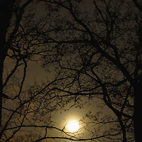 Moonlight shines through trees and nighttime darkness.