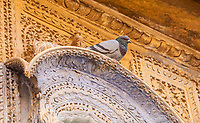A pigeon perched on an ornately carved sandstone archway, Jaisalmer, Rajasthan, India.