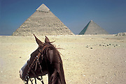 Riding Princess, the chestnut colored horse, at the pyramids in  the Giza desert.