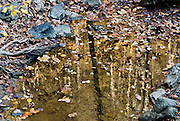 Leaves and tree trunks reflect in a puddle at Natural Tunnel State Park, near Duffield, Virginia in southeast USA.