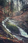 Small creek in a nearby forest on a rainy late autumn morning<br />