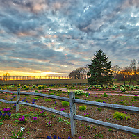 Massachusetts landscape sunset photography of the beautiful Belkin Family Lookout Farm with a bunch of Hyacinth flowers in Natick, MA.<br />