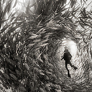 Andrea overwhelmed and surrounded by a swarm of silver jack fish during an exploration dive in Cabo Pulmo National Park, Mexico. <br />