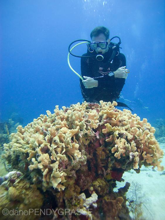 A diver admires a nice coral head in Roatan, Honduras.