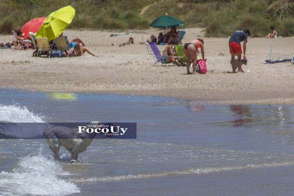Rocha,  Uruguay. 11 de Enero de 2018.  <br /> Balneario La Pedrera. Playa, Perro<br /> Foto: Gast&oacute;n Britos / FocoUy