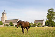 Bay horse in a meadow at Herenguerville in Normandy, France