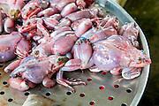 Frog, Market, Sa Dec, Mekong River, Vietnam, Asia