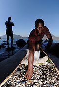 Local fishers with cichlids caught within the Lake Malawi National Park - the park was initially set up to conserve such cichlid diversity, Lake Malawi, Malawi.