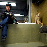 "Colby Procyk reads to (L-R) ""Nicky,"" ""Zane,"" and ""Kochi,"" cats up for adoption, during ""The Book Buddies Program"" at the Animal Rescue League of Berks County in Birdsboro, PA on February 11, 2014.  Children in grades 1-8 read to the cats as a way to improve their reading skills and gain confidence.  The shelter animals can be a non-evaluative presence that can provide support and comfort to participants without judging them.  Students showed sustained focus and maintained a higher state of awareness, as well as improved attitudes toward school, according to researchers at Tufts University.  Photo taken February 11, 2014.  REUTERS/Mark Makela  (UNITED STATES)"